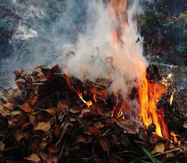 Картинки по запросу спалювання листя